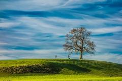 Münsinger Baum im Herbst - Andy Ilmberger