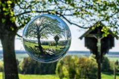 Weihern Holzkirchen Weltenbaum - Andy Ilmberger