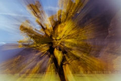 Herbstbaum im Zoom - Andy Ilmberger