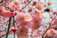 Frühlingserwachen Makrofotografie Andy Ilmberger
