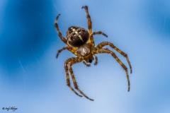 Tarantula Makrofotografie Andy Ilmberger