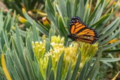 Schmetterling Makrofotografie Andy Ilmberger