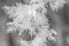 Winter Eisblumen Makrofotografie Andy Ilmberger