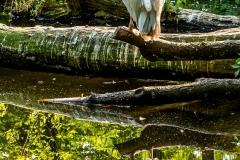Pelikan - Andy Ilmberger